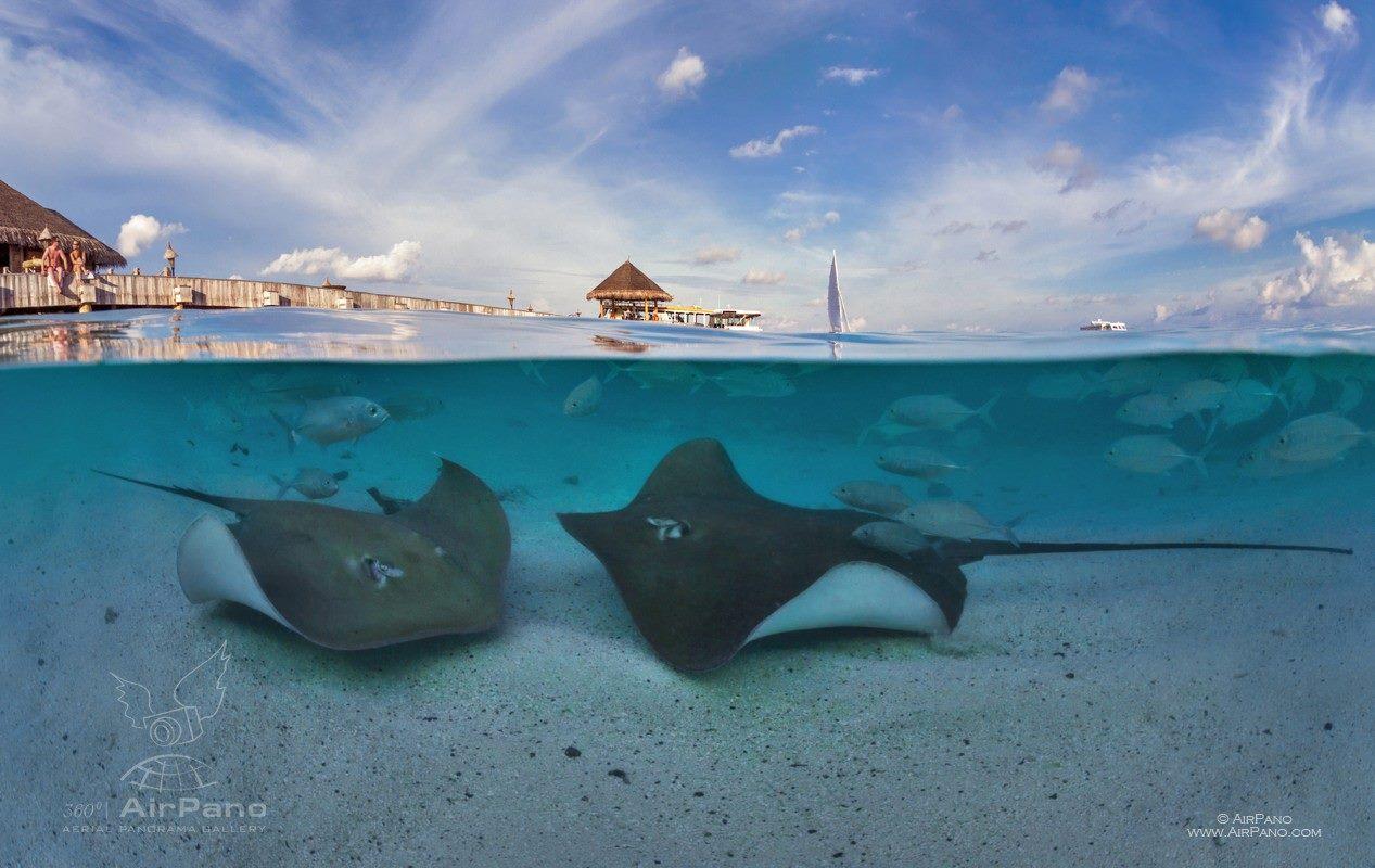 Única fotografia do projeto de panorâmica não realizada dos ares, a imagem mostra a vida marinha nas Ilhas Maldivas.
