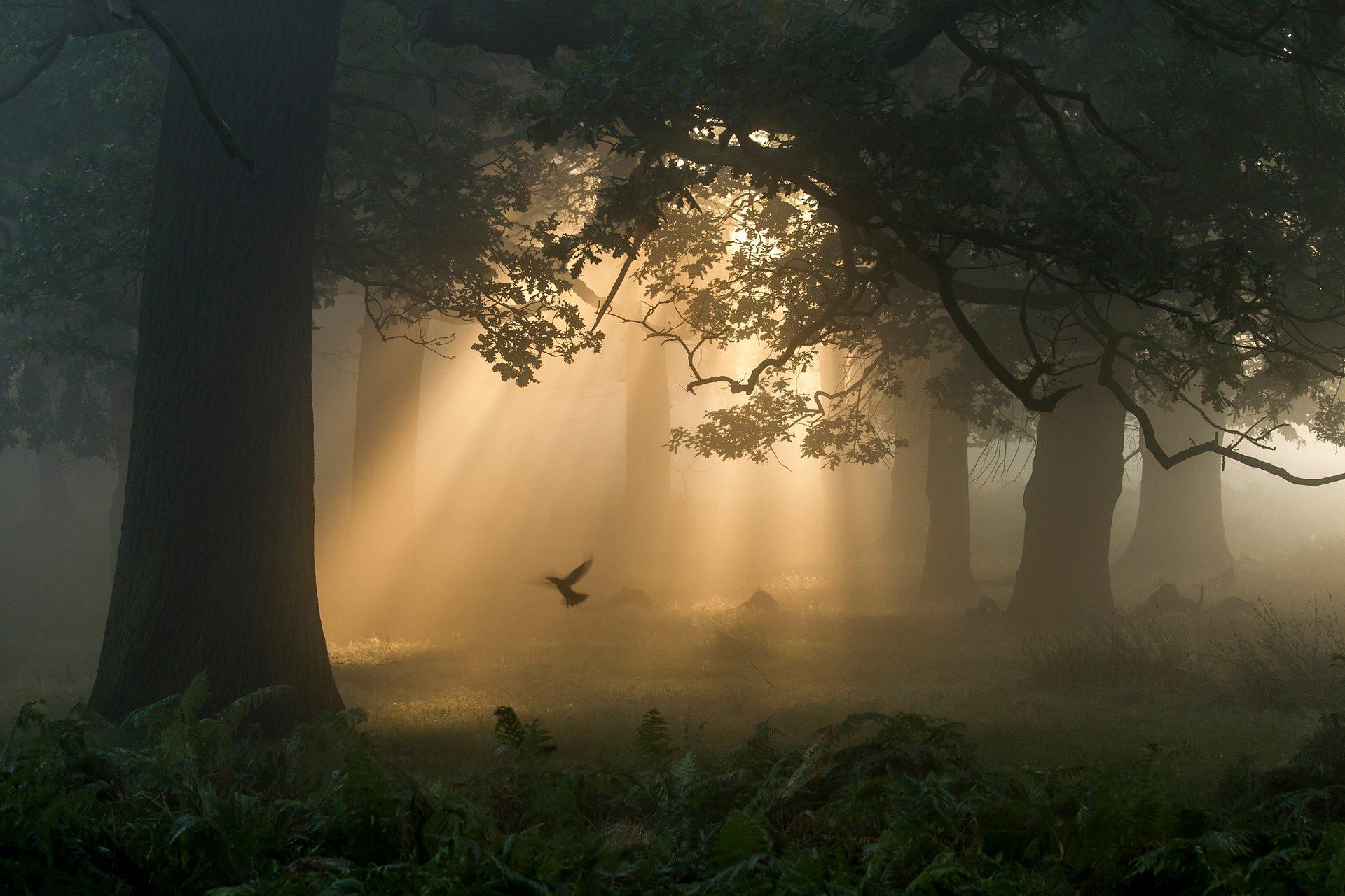 """""""Uma palpitação na floresta"""", por Chaitanya Deshpande - vencedora na categoria florestas selvagens. Fotografia feita em Londres, na Inglaterra"""