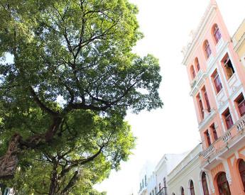 Mapa inédito do Recife Antigo traz raio X de 500 árvores
