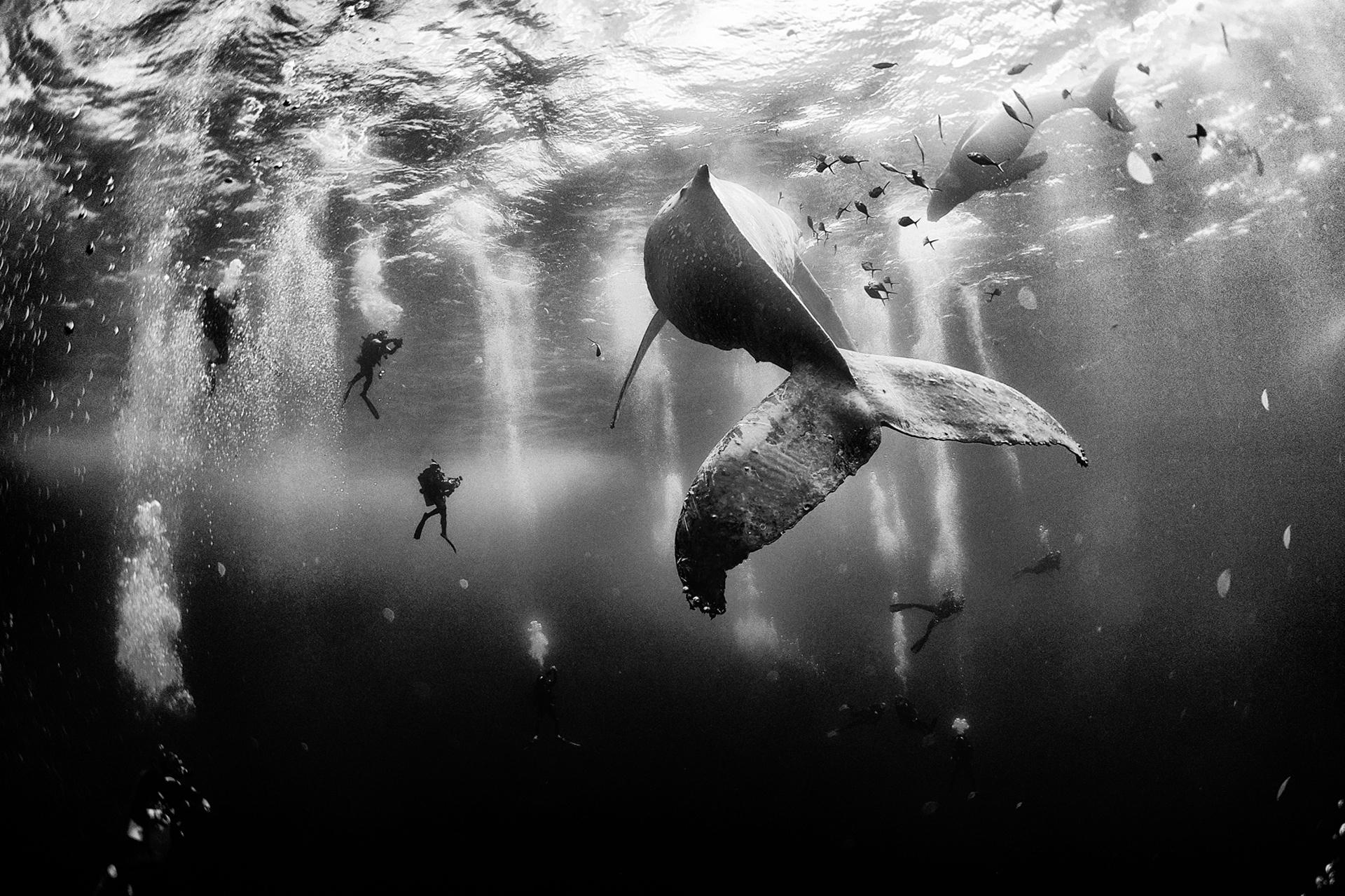 """1° LUGAR: """"Encantadores de baleias, próximo à Ilha de Roca Partida, em Revillagigedo, no México"""", por Anuar Patjane"""