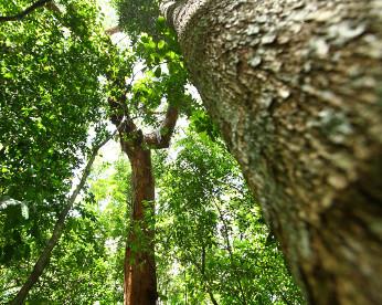 Jardim Botânico do Recife é alçado ao top 5 do Brasil, mas continua pouco conhecido