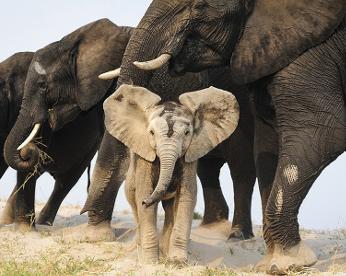 Concurso da National Geographic premiará melhores fotografias de 2015