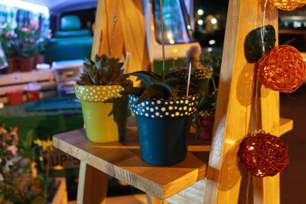 Os preços das plantas variam de acordo com o vaso