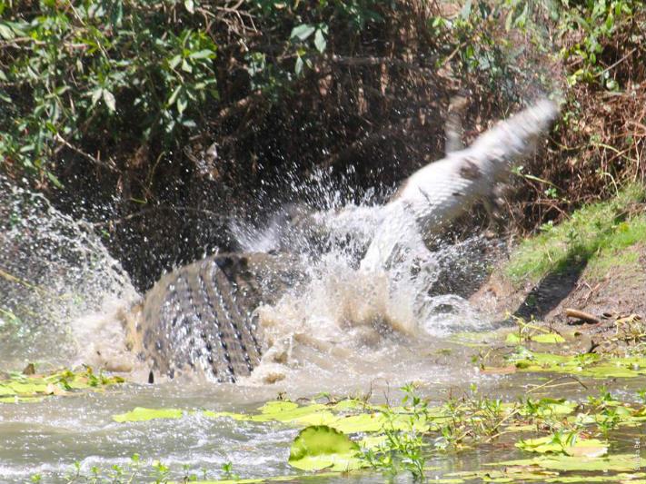 Foto: Reprodução/Facebook/Queensland National Parks