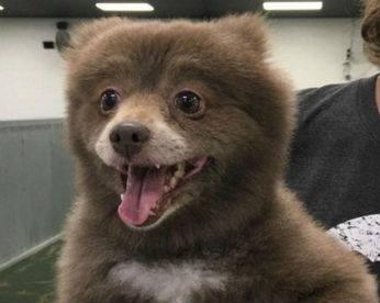 Foto de animal fofo divide a internet: é um cão ou é um urso?