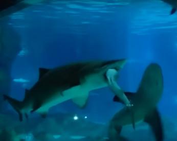 Tubarão come outro em aquário da Coréia do Sul