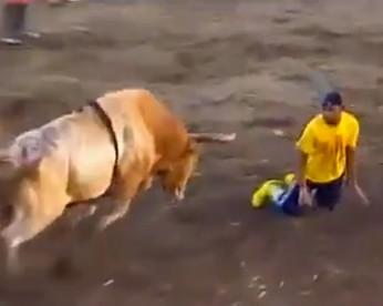 Durante tourada, homem é chifrado e lançado por touro de 450 quilos