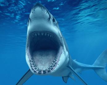 Fotografia mostra suposto maior tubarão branco já registrado, na Austrália