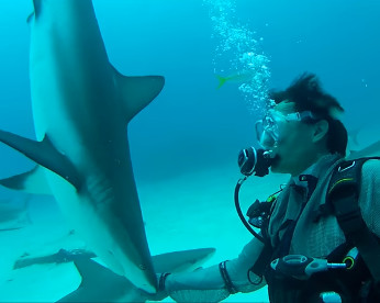 Vídeo mostra profissionais hipnotizando tubarões
