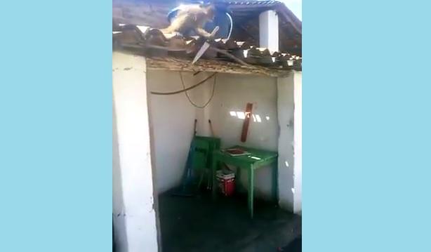 Militares são chamados para deter macaco com peixeira, no Sertão da Paraíba