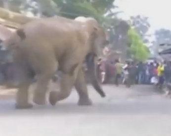 Elefante selvagem causa tumulto em cidade indiana
