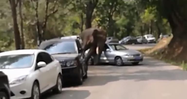 Desiludido no amor, elefante danifica 15 carros na China