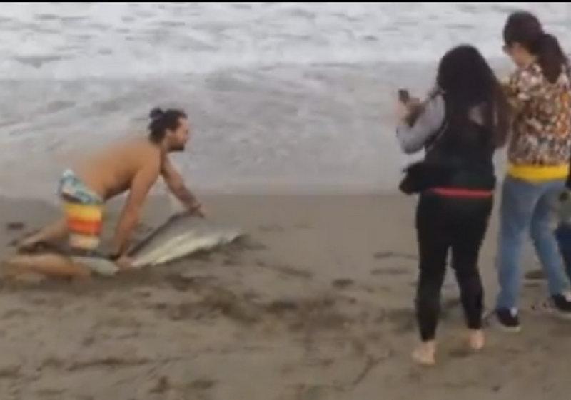 Vídeo flagra homem arrastando tubarão na areia para tirar fotos, nos EUA