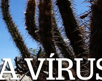 Entre o Ibura e a Brasilândia, o Aedes aegypti