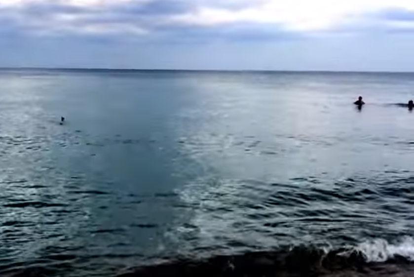 Tubarões causam pânico em banhistas nos Estados Unidos