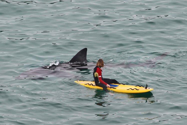 Tubarão gigante surpreende surfistas e é fotografado