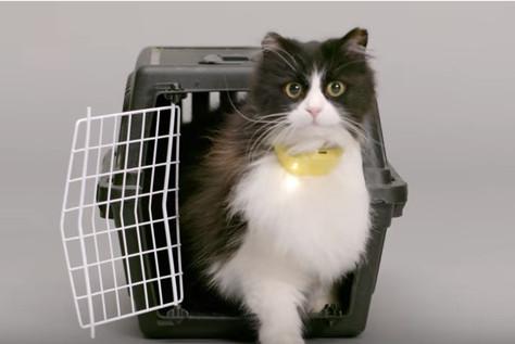Aparelho promete traduzir miados de gatos em fala humana