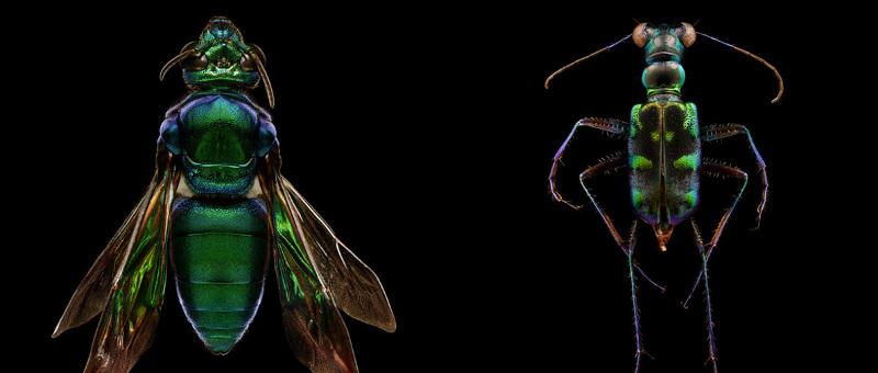 Fotógrafo registra detalhes impressionantes de insetos