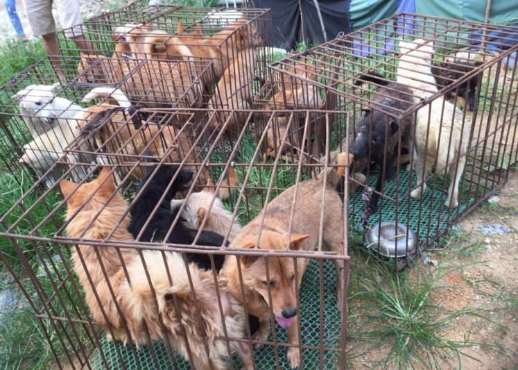 Cachorros são resgatados de abate em festival chinês