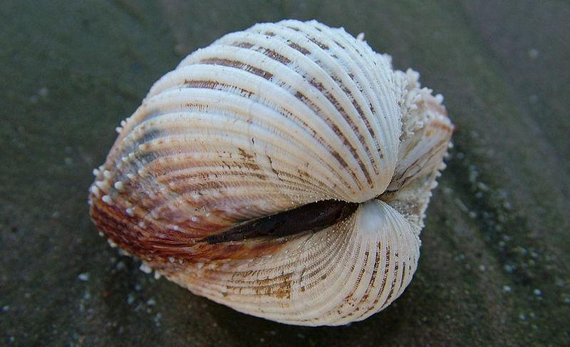 Câncer pode ser transmitido entre mariscos, diz pesquisa