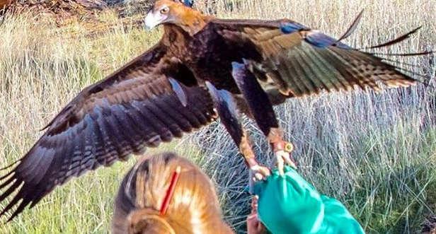 Mulher flagra águia tentando capturar criança em parque
