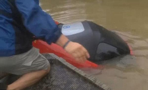 Vídeo: Em inundação, carro afunda e moradores salvam mulher