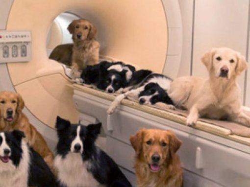 Cientistas descobrem que cães podem entender fala humana