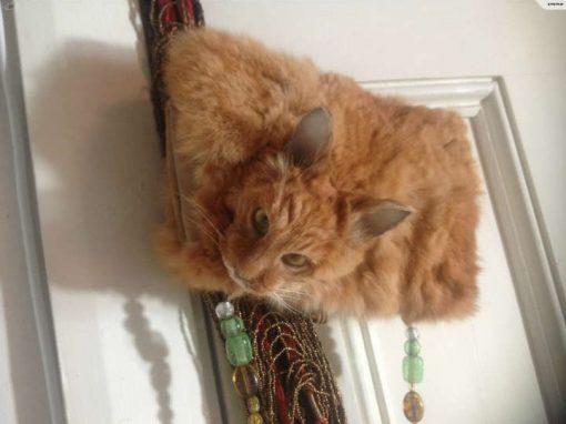 Bolsa feita com pele de gato é colocada à venda na internet