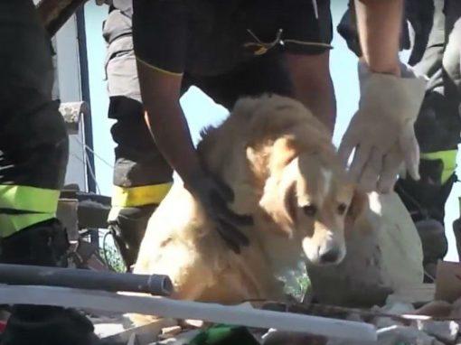 Animais são resgatados semanas após terremoto na Itália