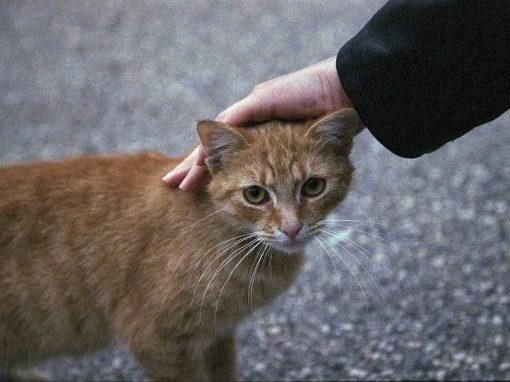 Acariciar gatinhos pode ser perigoso para você, atestam cientistas