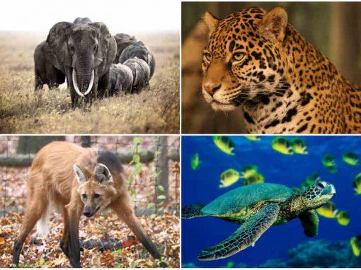Extinção de animais é a maior desde os dinossauros