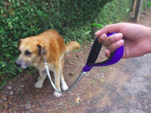 Cidade cataloga DNA em cocô de cães para punir donos