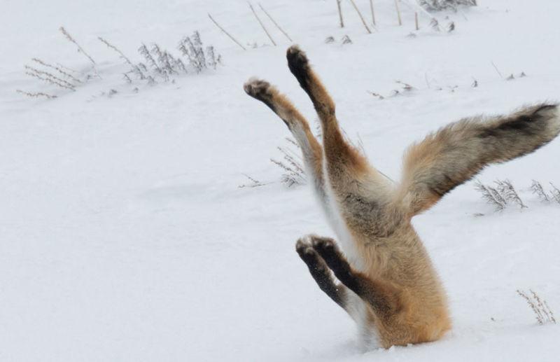 concurso premia melhores fotos engraçadas de animais