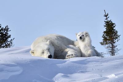fotografias-animais-selvagens10