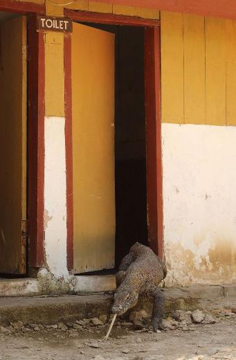 fotografias-animais-selvagens13