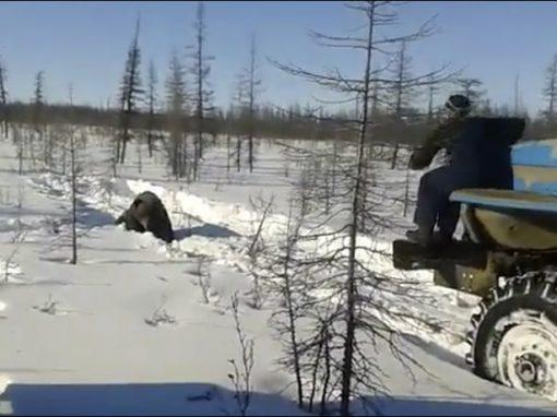 Vídeo de urso torturado até a morte revolta a Rússia