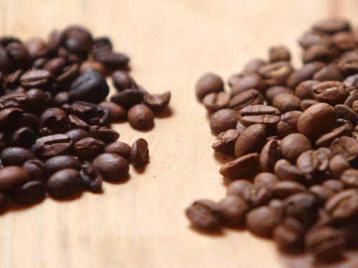 Ainda raras no estado, plantações de café fazem diferença no Agreste pernambucano