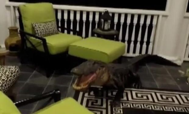 Família acreditava que casa estava sendo invadida por ladrão – mas era um crocodilo