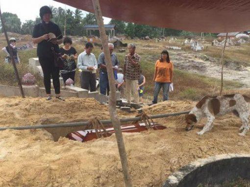 Cão percorre 3 km para acompanhar enterro da dona