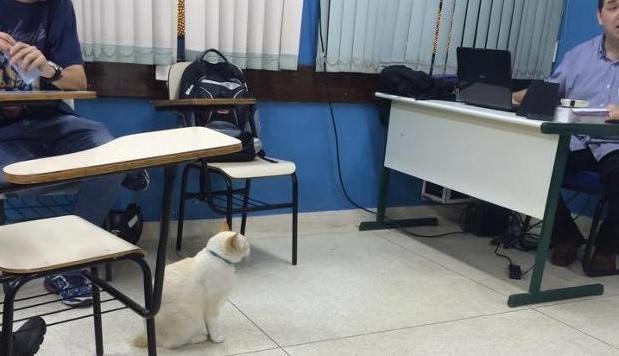 """Gato se torna """"aluno"""" mais conhecido de faculdade"""