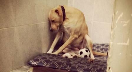 """Após dois abandonos, """"cadela mais triste do mundo"""" ganha novo lar"""