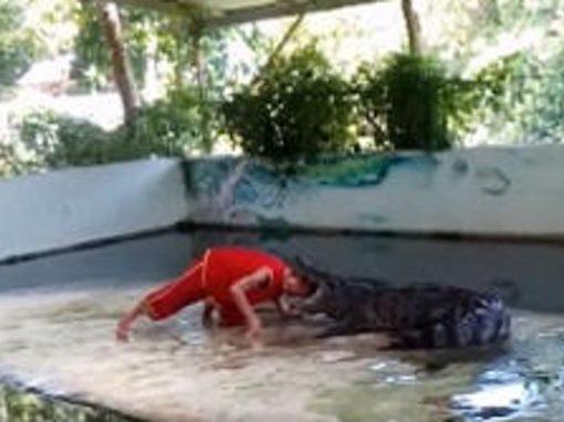 Crocodilo ataca adestrador durante apresentação