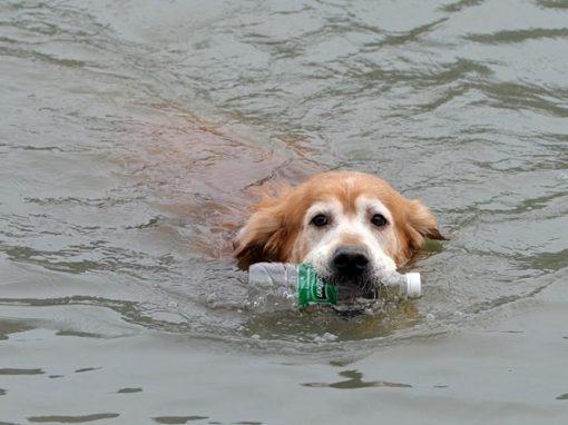 Cachorro já recolheu mais de duas mil garrafas de rio poluído na China