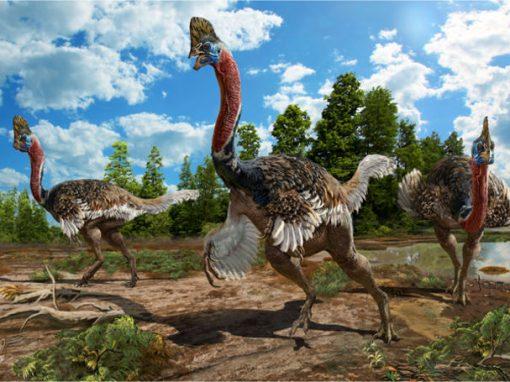 Cientistas acham fóssil de dinossauro com crista e plumas
