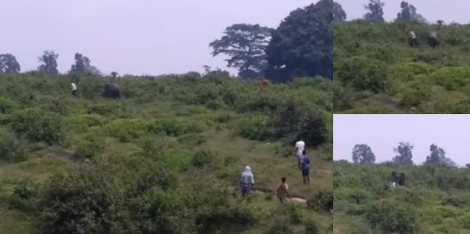 Ao tentar fazer selfie com elefante, homem acaba perseguido e morto por animal