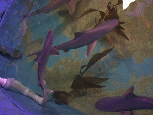 Polícia encontra piscina com tubarões em porão de casa