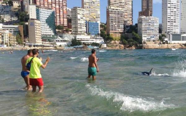 Turistas filmam tubarão nadando ao lado de banhistas