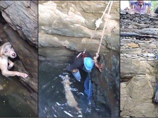 Após horas presa em poço de 20 metros, cadela é resgatada por voluntários