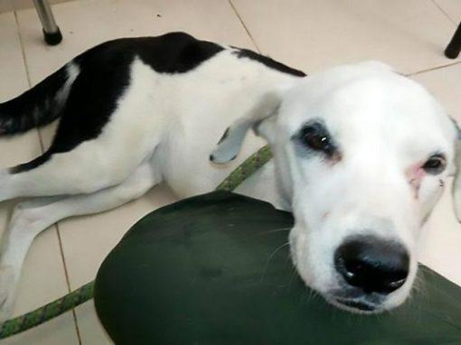 """Cachorro abandonado em aeroporto morre """"de tristeza"""""""
