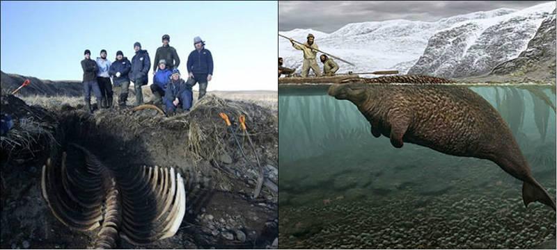Esqueleto de peixe-boi com 6m é encontrado em ilha